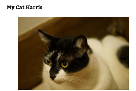 WordPress.com 上の猫の画像投稿の例。