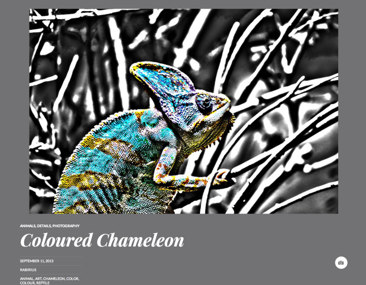 Coloured Chameleon