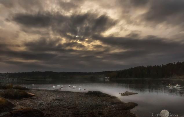 Lagoon of the bonny swans.