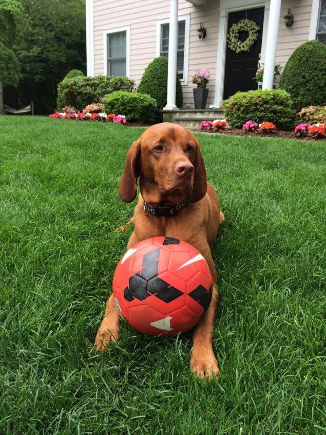 dog-soccer